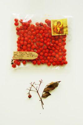 FISH MAIL ART: мэйл-арт конверты, объекты и открытки наси коптевой и саши браулова: autumn ashberry