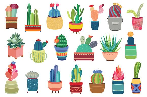 20 Succulents & Cactus Vector / PNG by Kenna Sato Designs on @creativemarket