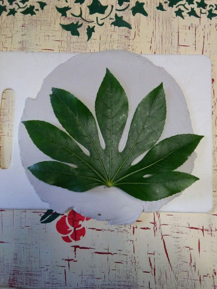 Lay a leaf on the top and bottom of Daz clay and roll to put impression of leaves onto clay