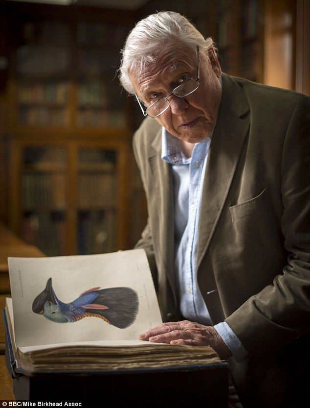 David Attenborough has produced many documentaries about tropical birds and pictured readi...