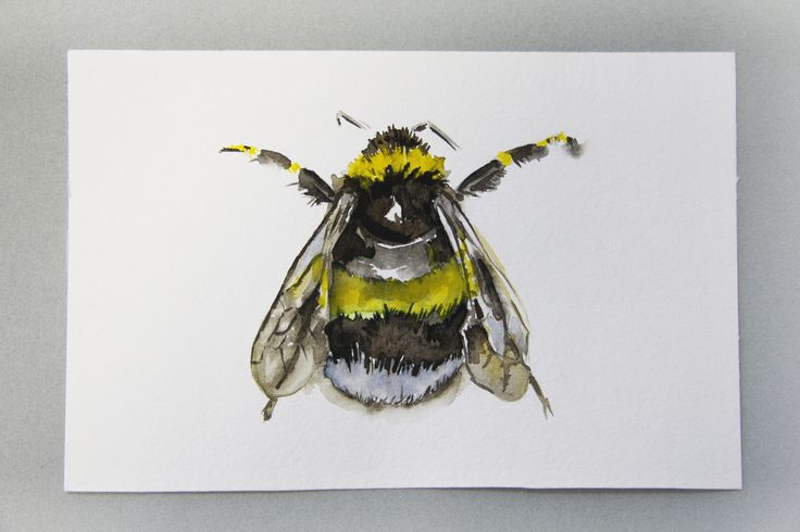 Watercolour bee for augmented reality app. Lemon and Cadmium yellow medium colours. 20x30 cm 2016