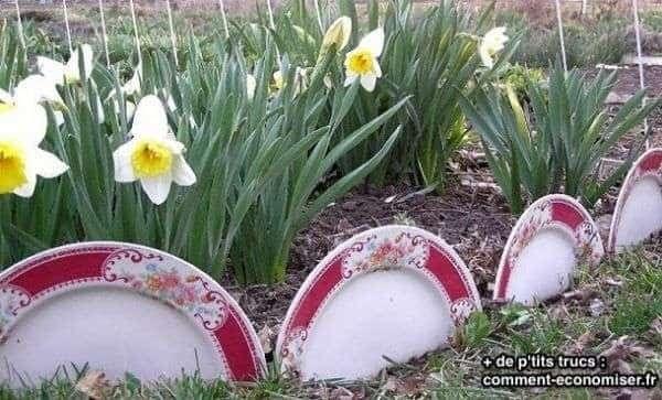 Assiettes recyclées dans le jardin