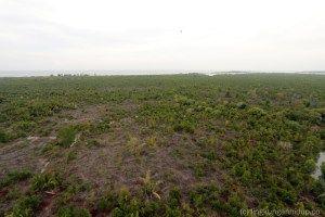keanekaragaman hayati ekosistem