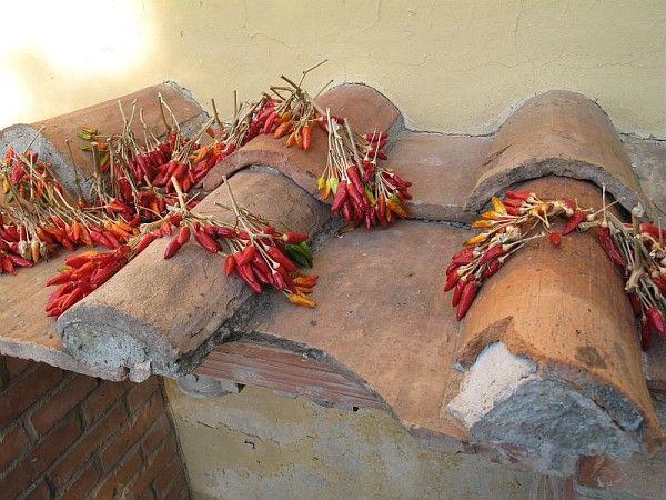 Piments mis à sécher sur les tuiles, Florence, Italie /©Musée du Vivant-AgroParisTech