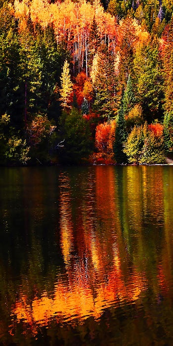 Lakeshore Reflections at Cottonwood Lake near Buena Vista, Colorado; photo by Terril Heilman
