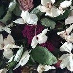 Statigram – Instagram webviewer flowers