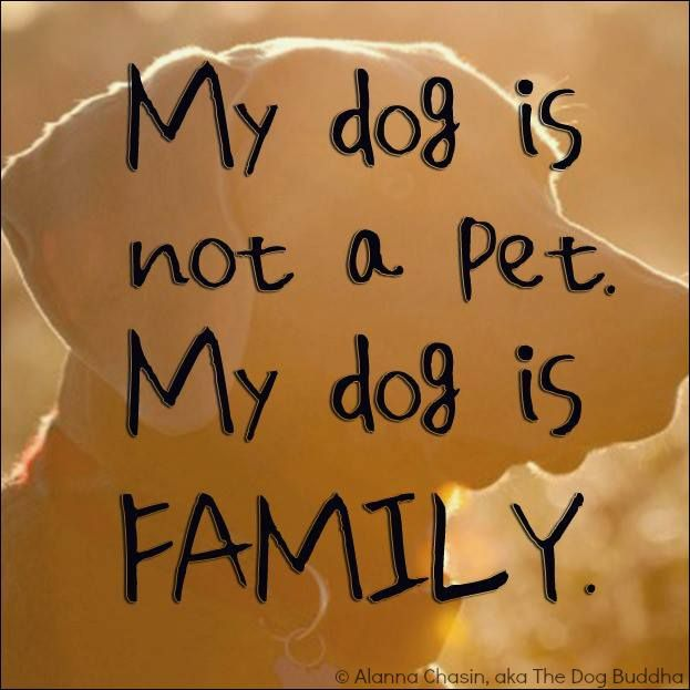 My Dog's!