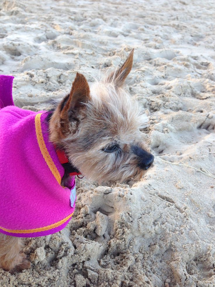 Mandy loves walking on the beach