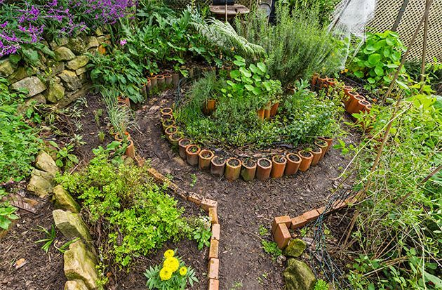 Learn the basics of permaculture- an eco-friendly way of growing veggies, fruit, eggs and more in your own backyard.