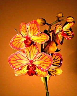 Butterfly Orchid.  I loved looking at and picking out my favorite Orchids to enjoy with you!