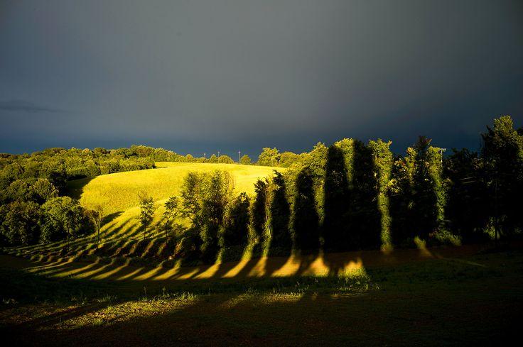 Joel Meyerowitz, Tuscany