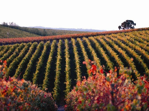Wine Lovers: Greetings from the Adelaide Hills