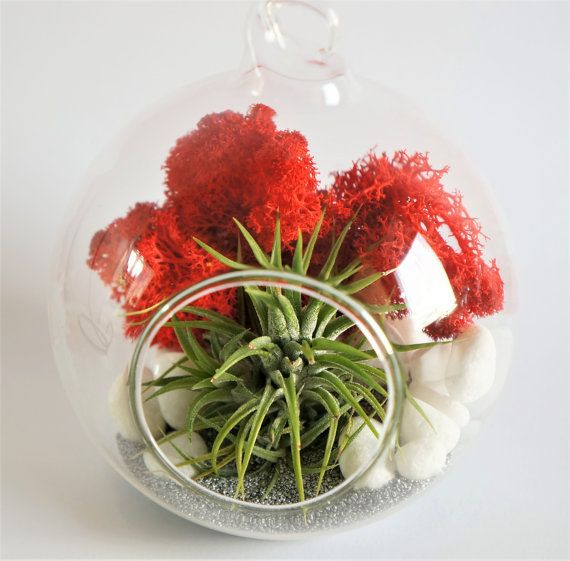Airplant terrarium kit  clear round glass orb by AlvinaDecco