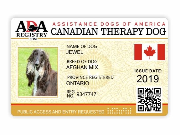 Canada Therapy Assistance Dog Service Dog Registration Service Dog Patches