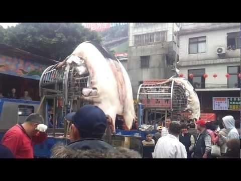 Sanxia Taiwan Jan 28, 2012 - Pigs of God