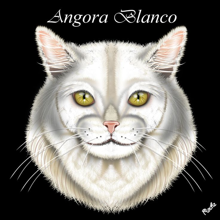 Raza de Gato Angora Blanco, Digital Painting