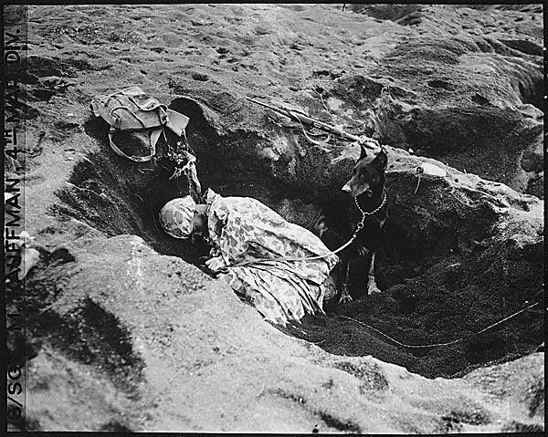 Private First Class Reg P. Hester 7th War Dog Platoon 25th Regiment USMC took a nap while Dutch his war dog stood guard Iwo Jima February 1945.