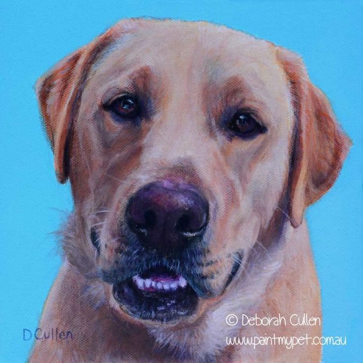 DOG PORTRAIT Rudolph, Golden Labrador Acrylic on canvas 17.70cm x 17.70cm        The pictures are perfect. Thanks so much!