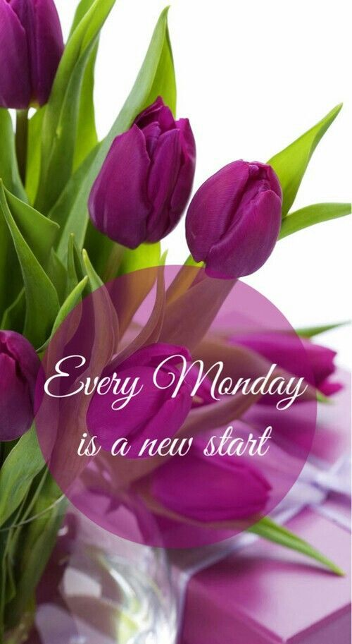 Every Monday Is A New Start monday monday quotes monday pictures monday images
