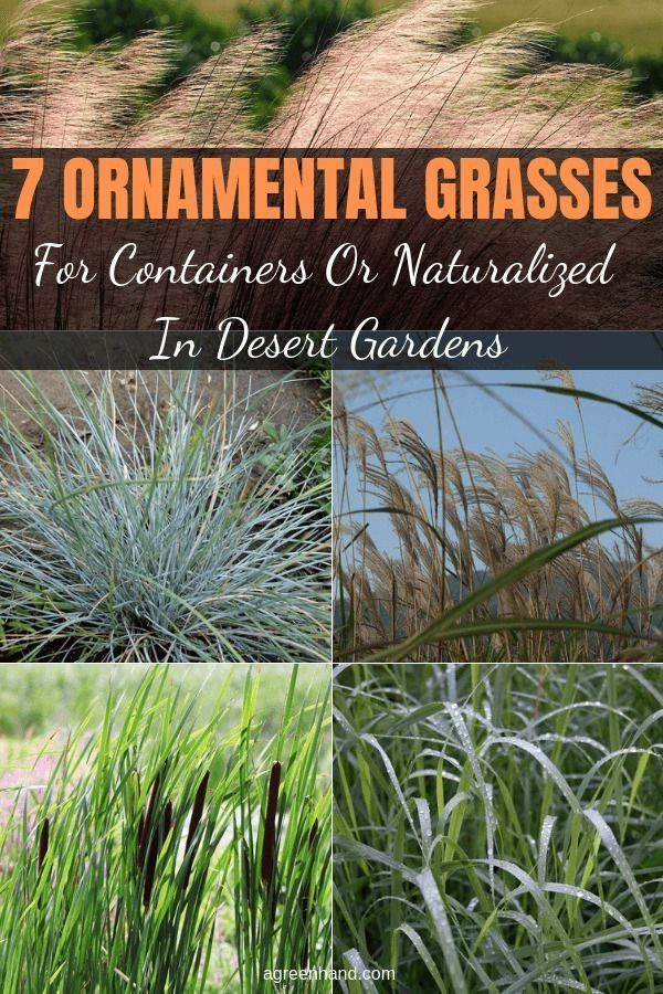 How To Make Grass Grow Fast Fix Bald Spots 556288 Grass Here S A Video And Simple How To Instructions Showing You In 2020 Ornamental Grasses Desert Garden Grass