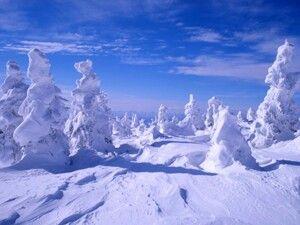 蔵王の樹氷 in宮城