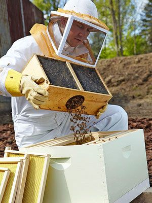 All the essential equipment, including hive parts, the smoker, and the hive tool, came in a kit purchased online from a mail-order supplier. It's best to start with new equipment to avoid any hidden problems.