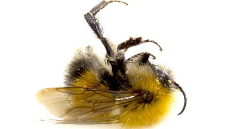 Sulfoxaflor sucks for pollinators. It's a new type of neonicotinoid insecticide that was approved by the EPA in May for use on a long list of crops — despite its toxic effects on honeybees, bumblebees, butterflies, and other pollinators.
