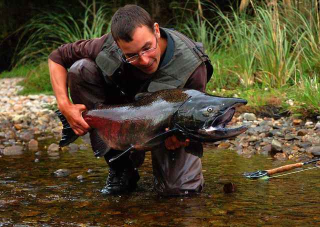 65 best images about fish videos on pinterest rivers for Fly fishing films
