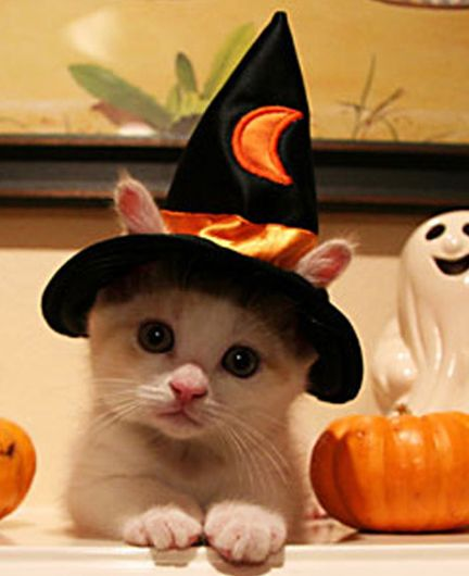 SOME OF THE CUTEST HOLLOWEEN PICTURES    Rabbits! Some are real, and some are not. Is that a cat at one end?