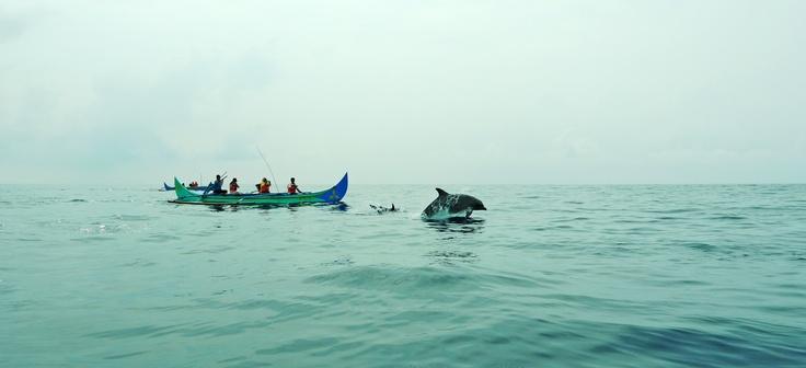 Fishermen and dolphins at heaven, Teluk Kiluan.