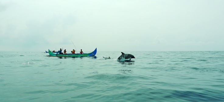 Fishermen and dolphins at heaven, Teluk Kiluan.