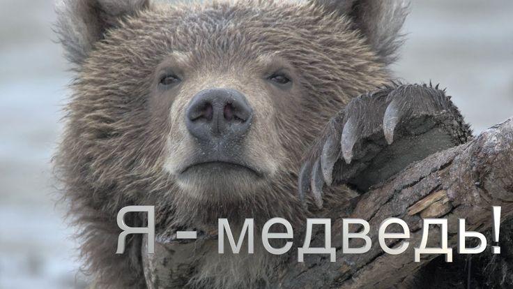 """Я - медведь!"". Тизер."