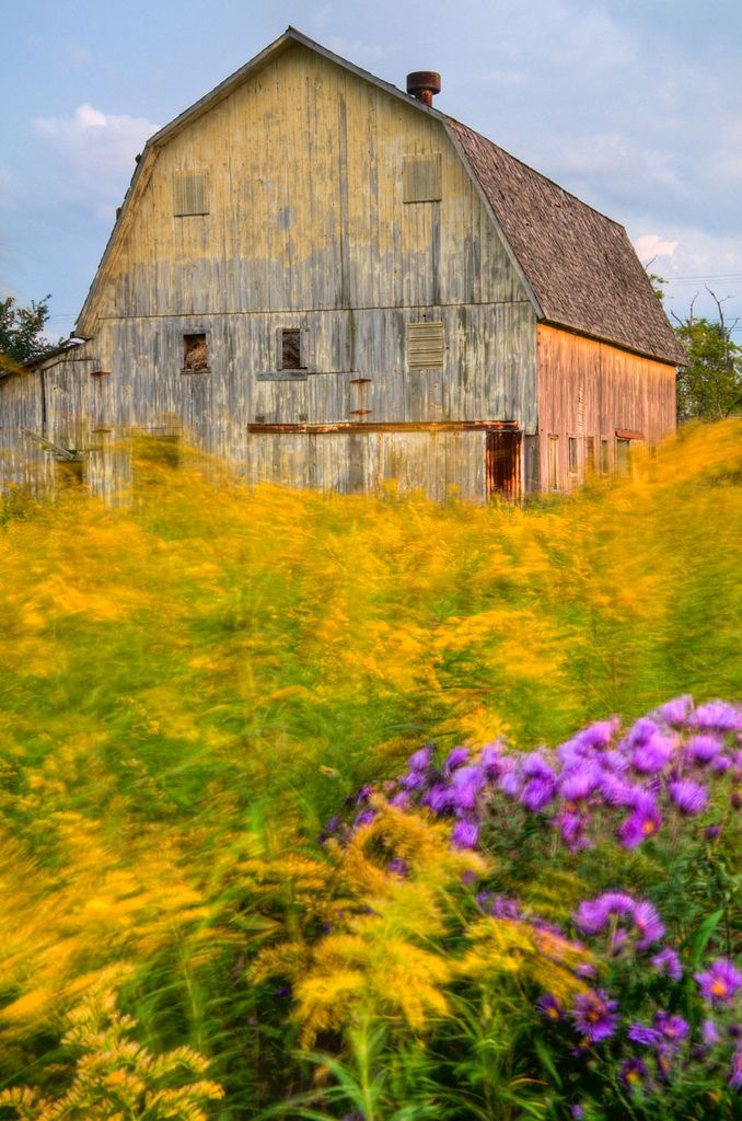 """Yellow Barn"" by Pure Michigan on Flickr - This photo was taken on a slightly windy day in a field of goldenrod."