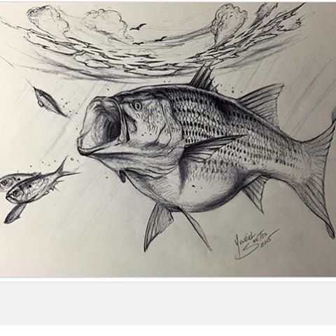 231 best images about bass fishin art