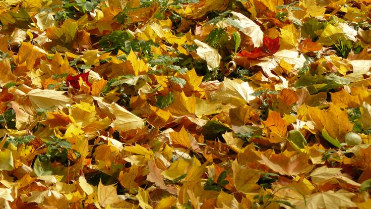 so_many_leafs_by_terra17-d5kd6pa.jpg (3072×1728)