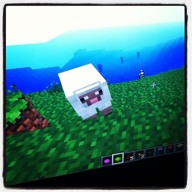 Får i Tjäröversionen av Minecraft! Instagram photo by @glimra (Anna Hass)   Statigram