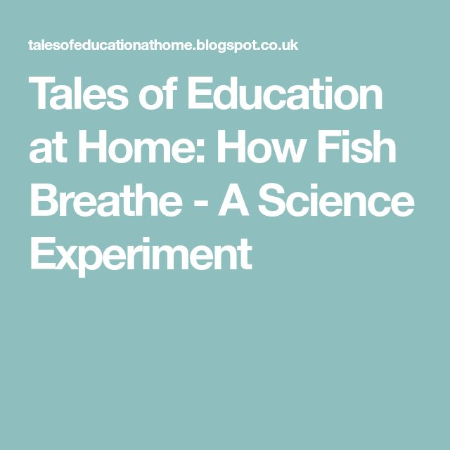 Tales of Education at Home: How Fish Breathe - A Science Experiment