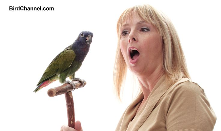 What's the best way to train your pet bird? By having fun. Here's 7 games that your bird will love, and also train her.