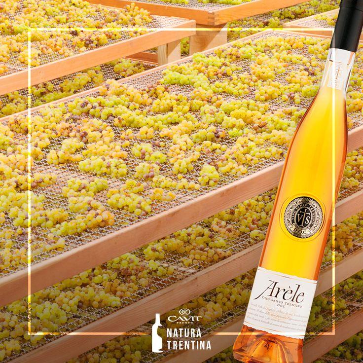 Conosci il Vino Santo Trentino Doc? Arèle è il #Vino Santo della tradizione: 100% Nosiola, dolce e raffinato, perfetto per accompagnare i dolci di #Pasqua.
