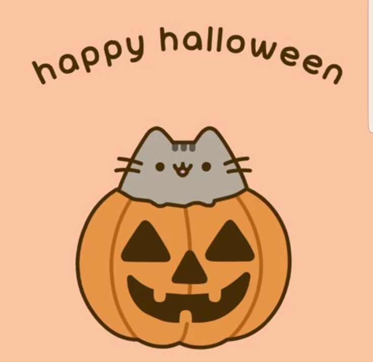 Halloween Kitty Cat Videos