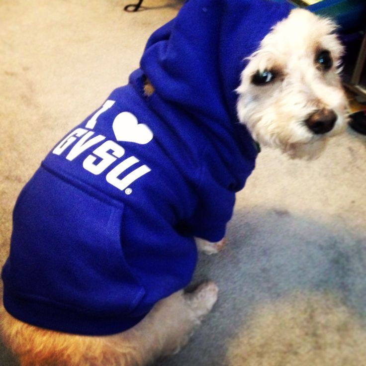Trooper can wear this to the party!           I <3 GVSU. Dog hoodie for Grand Valley State University. Blue college dog clothes.