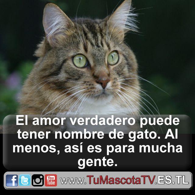 #comoperrosygatos #mascotas @MarelisMercado1