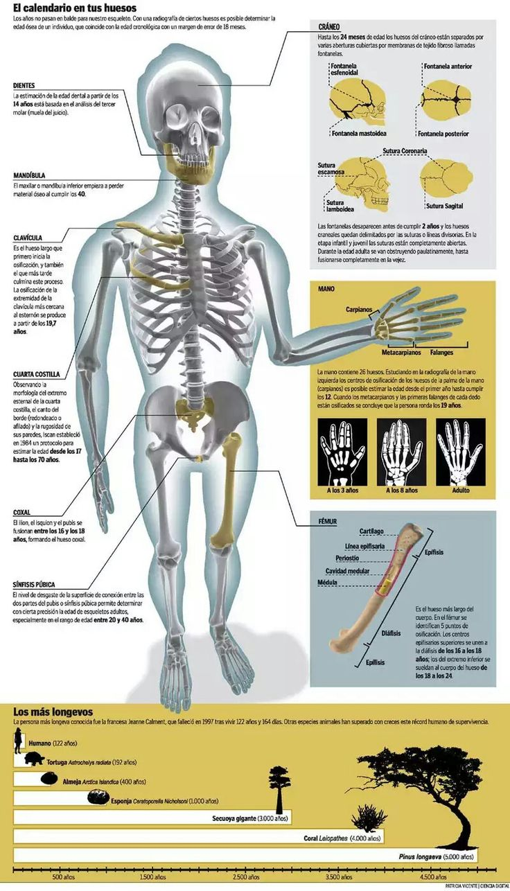 Lujoso Anatomía Y Fisiología Para Colorear Libro De Capítulos 7 ...