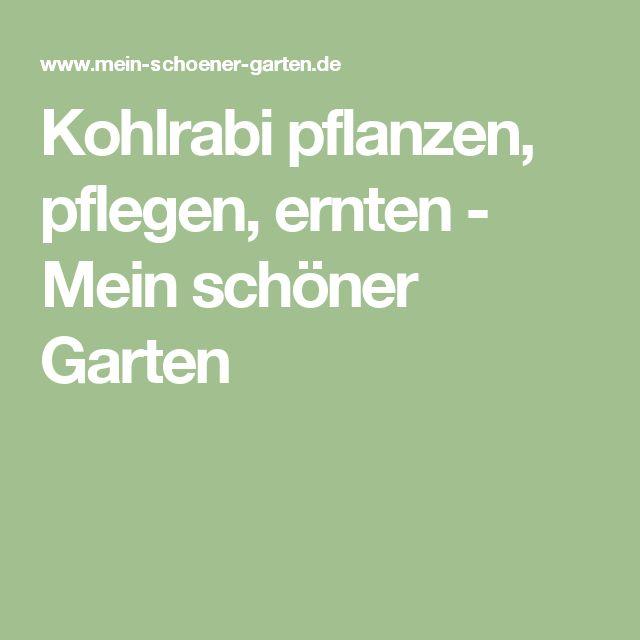 Kohlrabi pflanzen, pflegen, ernten - Mein schöner Garten