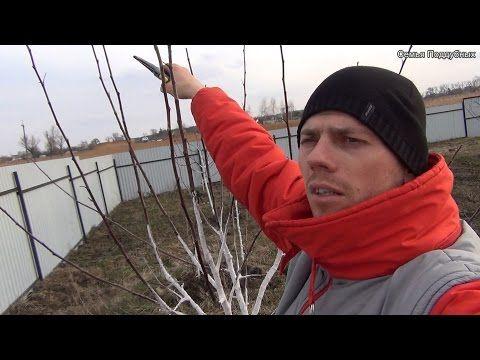Омолаживающая обрезка старых деревьев - YouTube