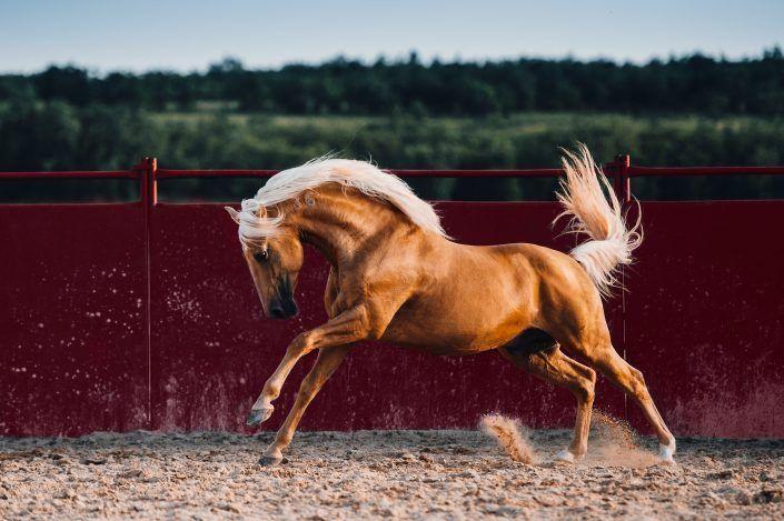 Fotos Pferde In Der Natur I Anna Ibelshauser In 2020 Pferde Fotografie Pferde Schone Pferde