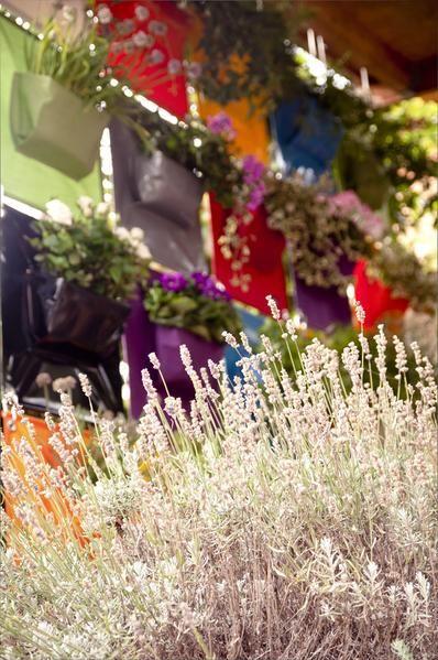Der Pflanzbehälter PEVA 1 ist ein Hängeblumentopf zum Anlegen bunter, vertikaler Gärten im Innen- sowie Außenbereich.