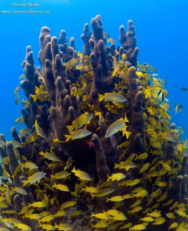 This pic was taken off the reefs at Old Bahama Bay by Duncan Brake.
