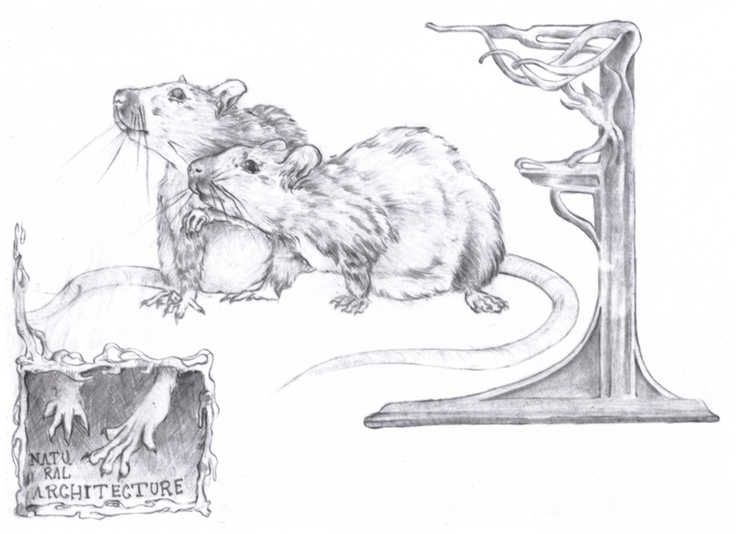 rats and victorian imagery
