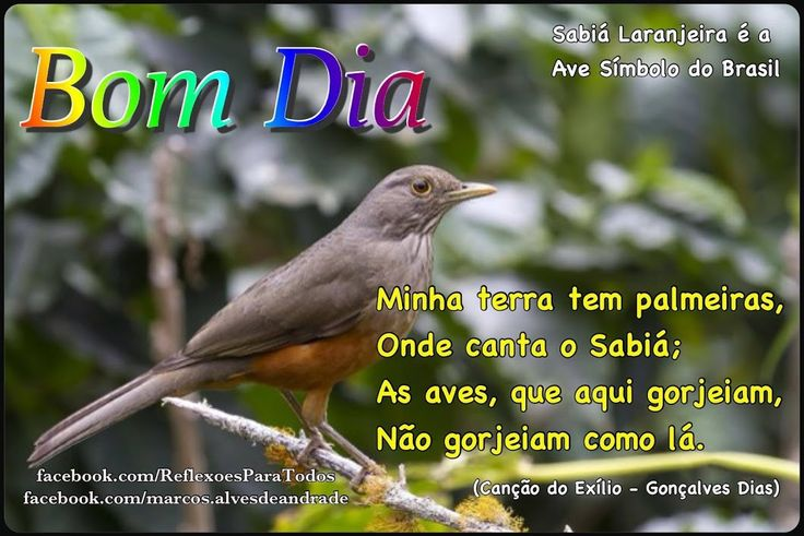 17 Best Images About Bom Dia On Pinterest